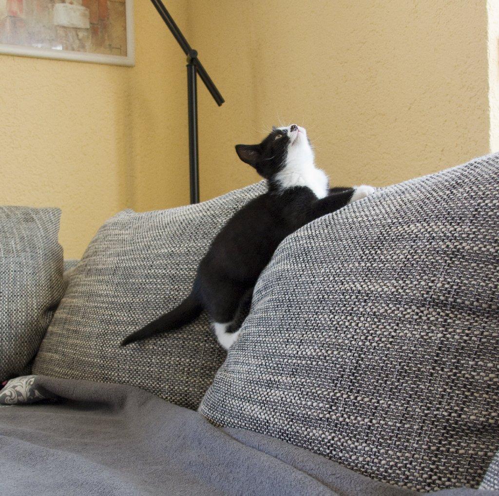 katzen. Black Bedroom Furniture Sets. Home Design Ideas